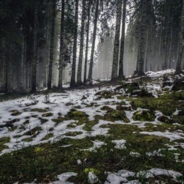 forest with melting snow