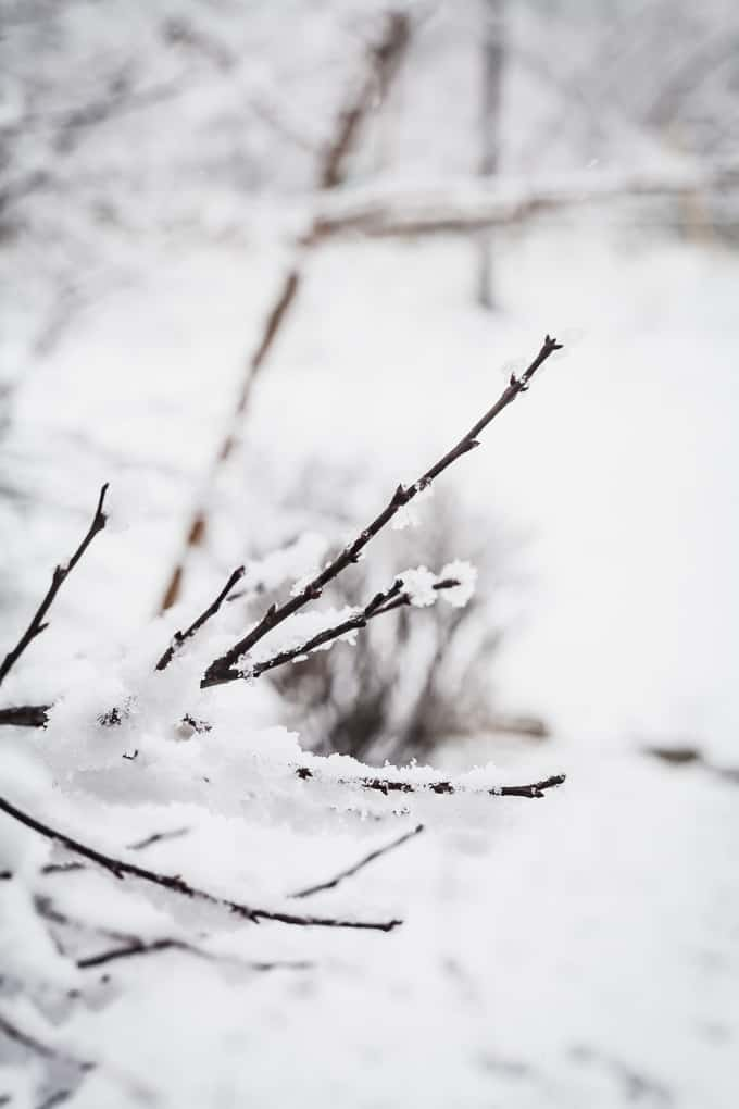 tree branch with snow on it